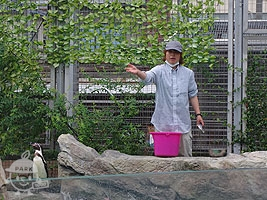 ペンギンのお食事タイム