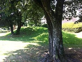 木陰でのんびり