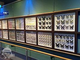 昆虫の標本