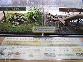 小川の実験・観察テーブル