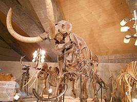 哺乳類の骨格標本