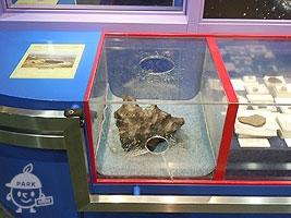 本物の隕石