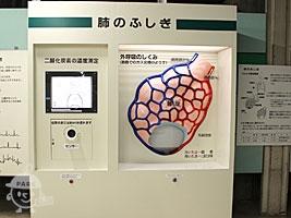 肺のふしぎ