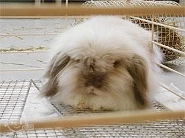 ウサギのドーム