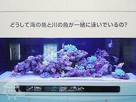海の魚と川の魚