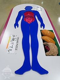 内臓パズル