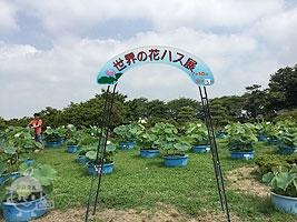 世界の花ハス展