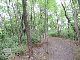 野鳥・昆虫の森
