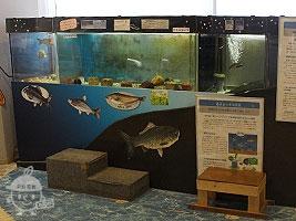 琵琶湖の水辺コーナー