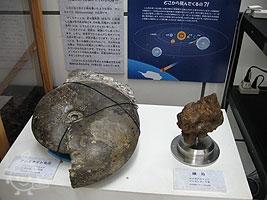 本物の化石