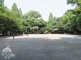 プラタナスの広場