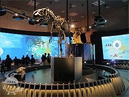 アロサウルスの化石