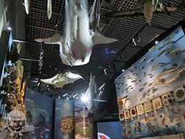「海洋生物の多様性」コーナー