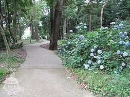 森の小広場
