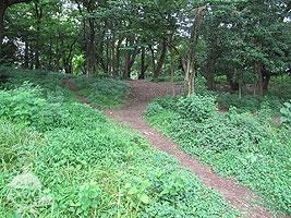 里山の樹林