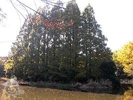 「葦の島」と「松の島」