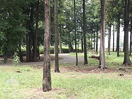 公園内にある林の中の道