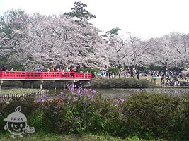 八つ橋と桜