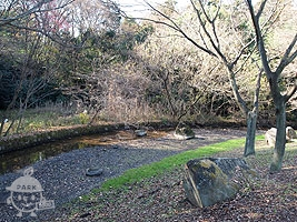自然林の前の川