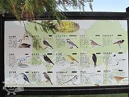 野鳥の種類