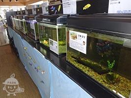 霞ヶ浦の淡水魚
