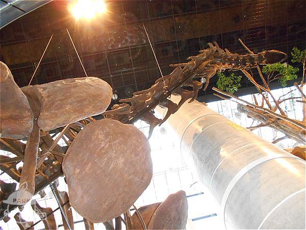 ヌオエロサウルス