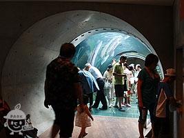 アクアコリドール(チューブ型トンネル)
