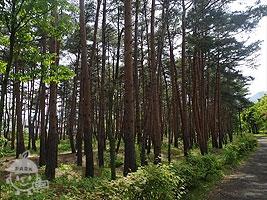 健康の森ゾーン