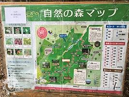 自然の森マップ