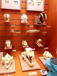 動物の頭骨
