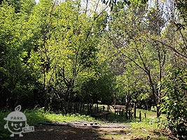 慶山(きょんざん)の森