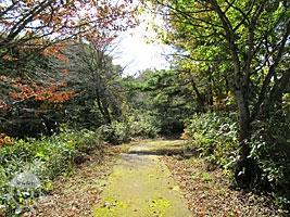 林地観察園