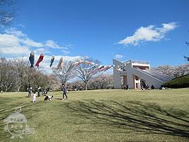 春の桜の広場
