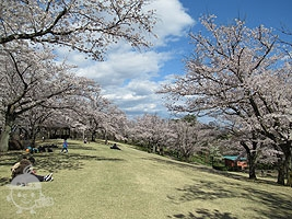 春の中央広場