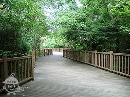 トチノキ橋