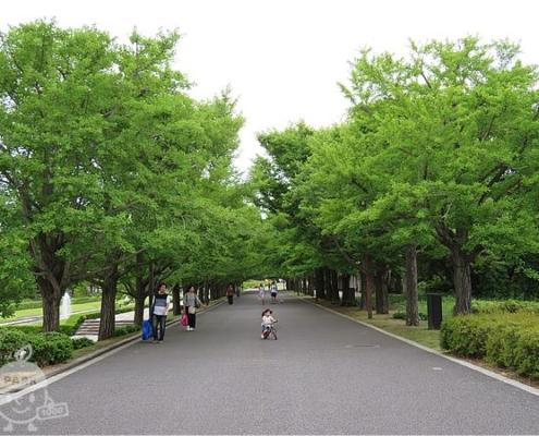 イチョウ並木の通路