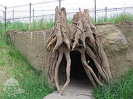 杜の洞窟!探検ゾーン