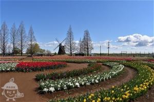 花畑(チューリップ)