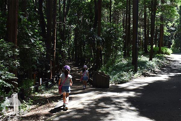 森の中のお散歩ゾーンへ