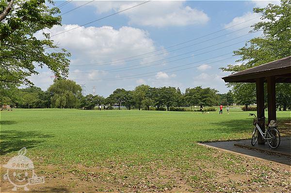 柏ふるさと公園・芝生広場