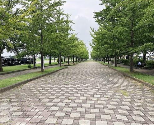 駐車場側の園路
