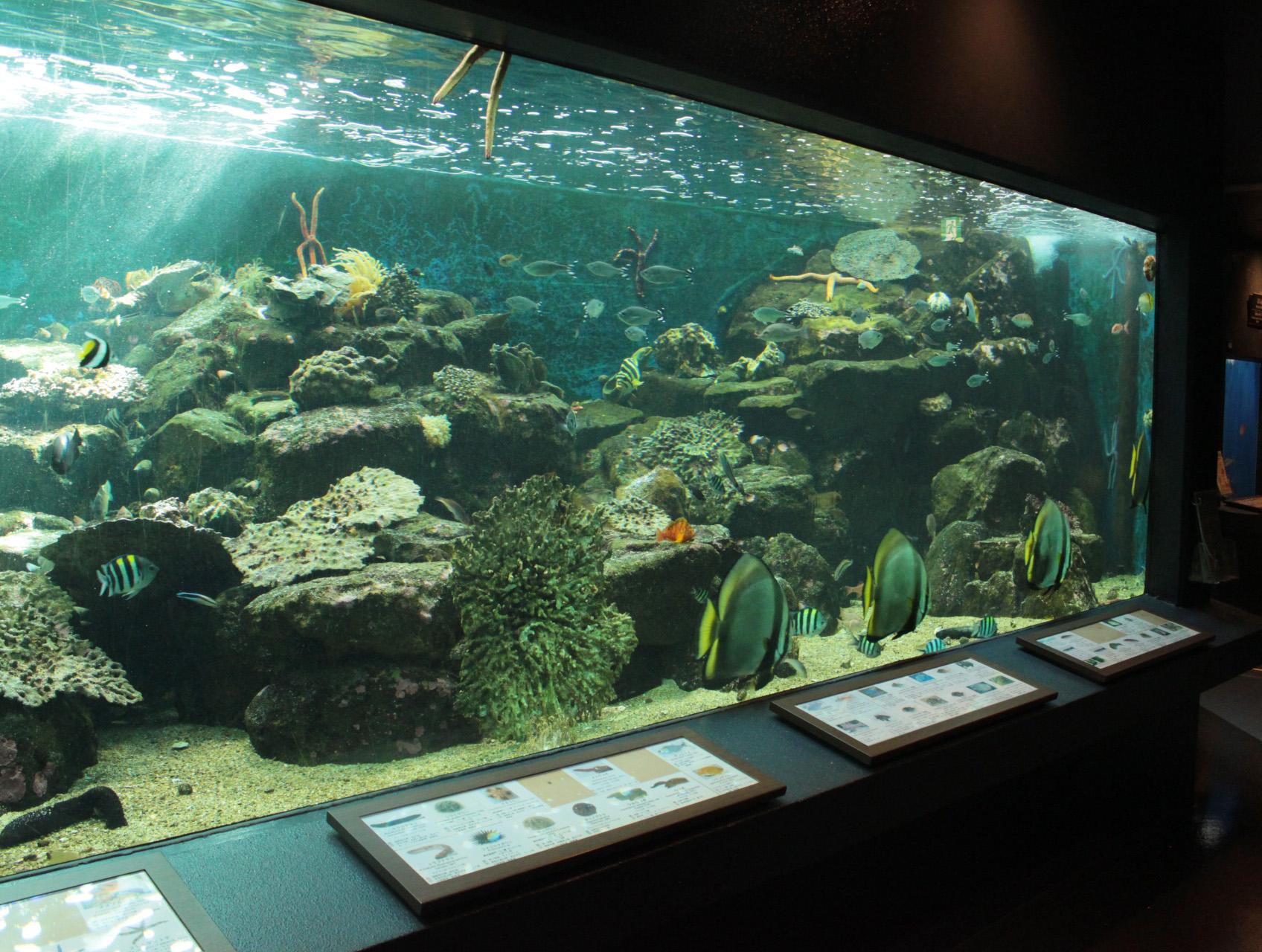 岩礁・黒潮の豊かな生物