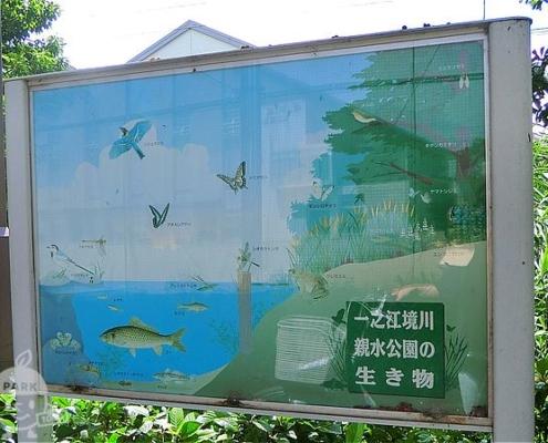一之江境川親水公園の生き物