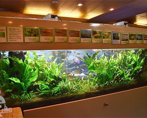 河川に住む魚たち