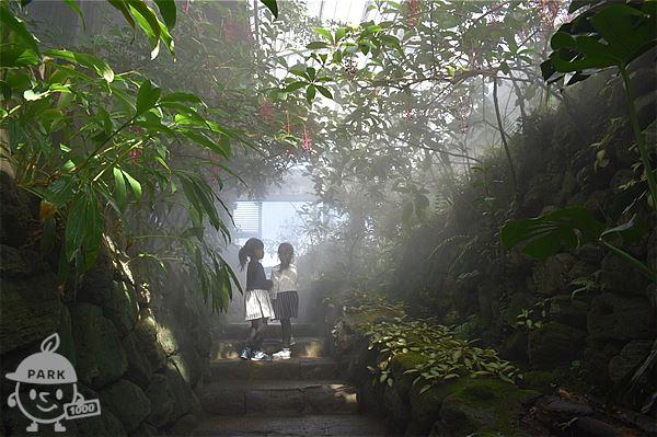 雲霧林(冷室)ゾーン