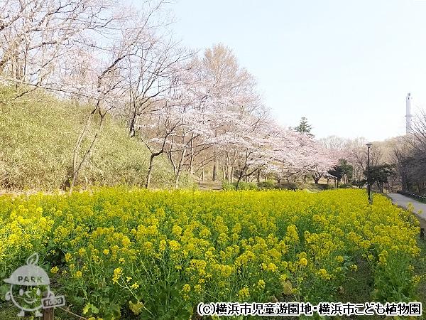 横浜市児童遊園地・横浜市こども植物園