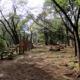 八菅山いこいの森