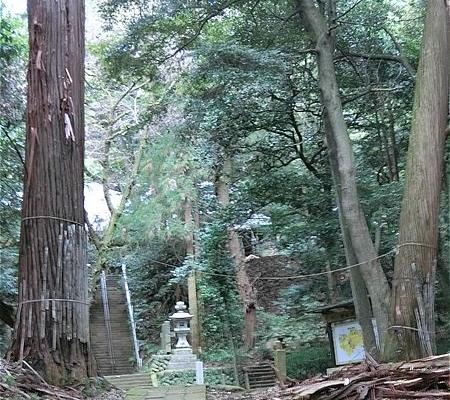 八菅神社の社叢林