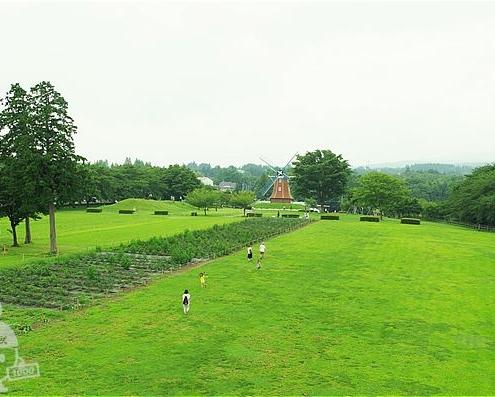 シャクヤク園